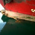 Salvatajes - Nautilus Sermares